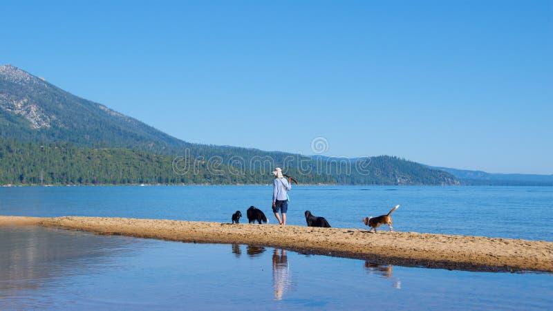 El lago Tahoe del sur, California - agosto de 2017: Persiga al amante que juega con los perros en el lago Tahoe del sur en Califo imagenes de archivo