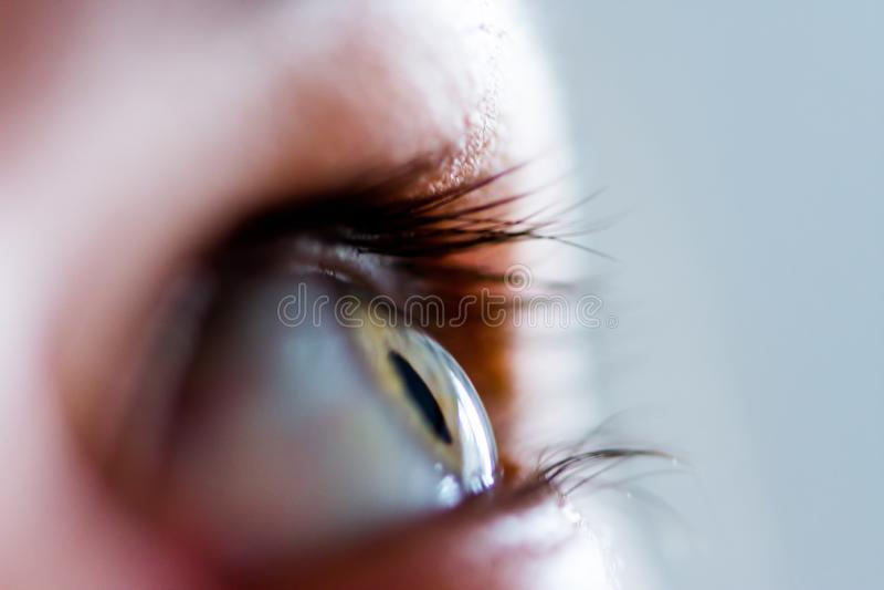 El lanzamiento macro del ojo gris del verde azul fotografía de archivo libre de regalías