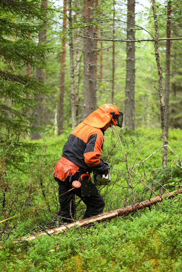 El leñador corta la motosierra del árbol del corte de ramas foto de archivo