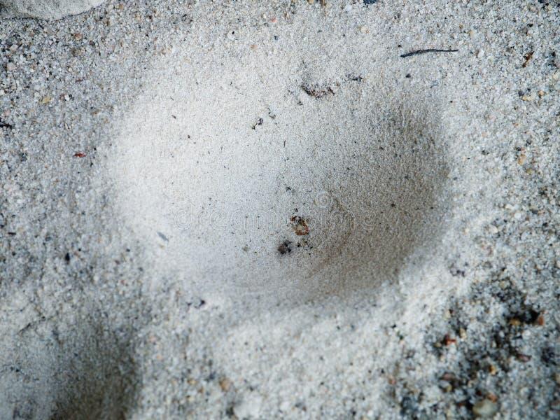 El león de hormiga hiden en el hoyuelo, trampa del insecto en la arena imagen de archivo libre de regalías