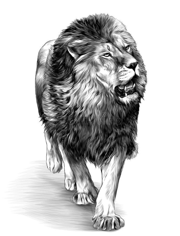 El león en crecimiento completo va ilustración del vector