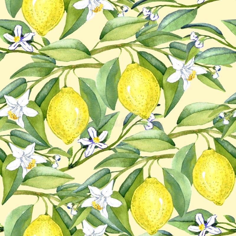El limón ramifica con las frutas y las flores blancas en fondo amarillo suave libre illustration