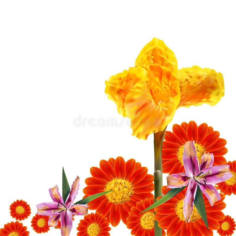 El lirio de Canna, el girasol mexicano y el lirio florecen en el fondo blanco ilustración del vector