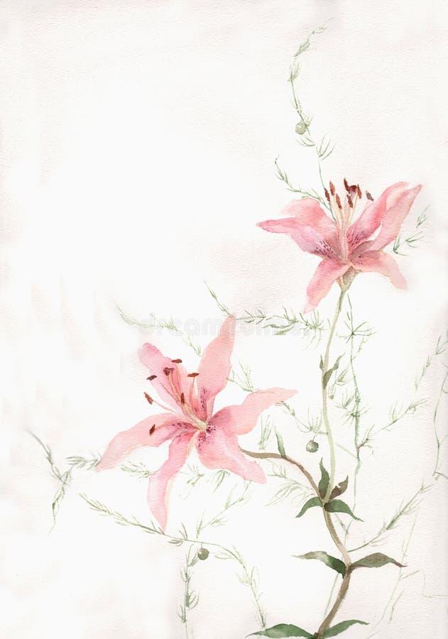 El lirio rosado florece la pintura de la acuarela stock de ilustración