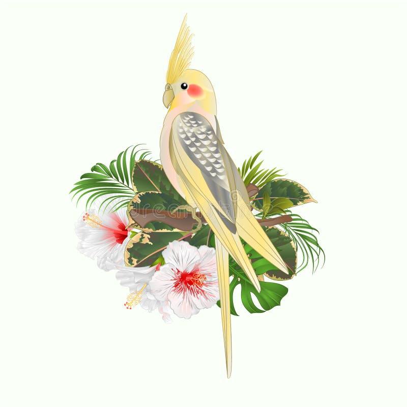 El loro divertido del pájaro tropical lindo amarillo del cockatiel y el estilo blanco de la acuarela del hibisco en un vintage bl ilustración del vector
