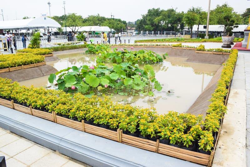 El loto en la piscina 171105 0024 foto de archivo libre de regalías