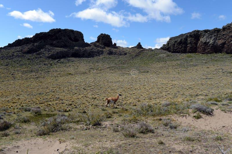 El lugar habitado por las tribus indias antiguas en el parque nacional Pali Aike fotos de archivo libres de regalías