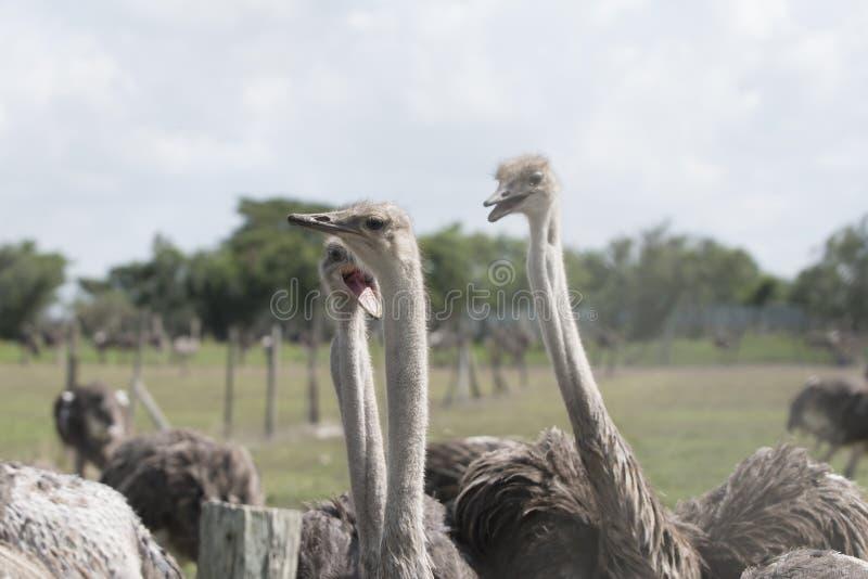 El más grande de pájaros en el mundo fotografía de archivo libre de regalías
