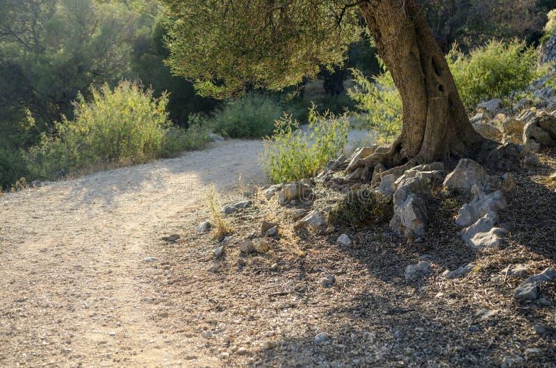 el Madrid molarnej noc oliwny sceny drzewo fotografia stock