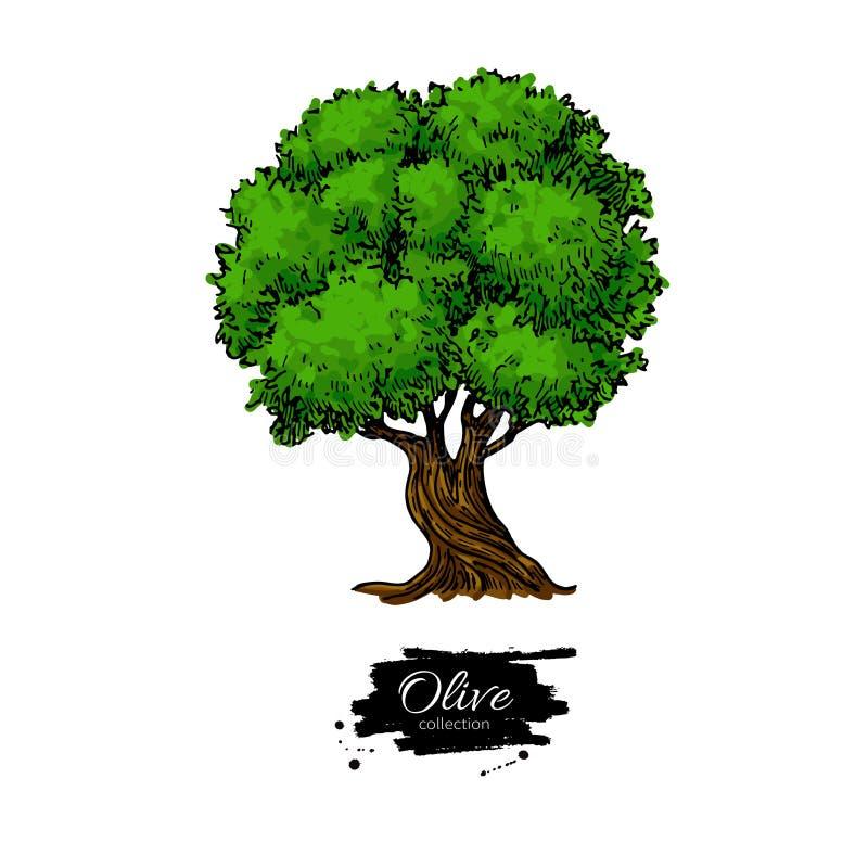 el Madrid molarnej noc oliwny sceny drzewo Ręka rysująca wektorowa ilustracja Rocznika botaniczny rysunek ilustracja wektor