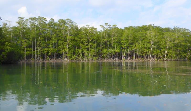El mangle reforesta imagenes de archivo