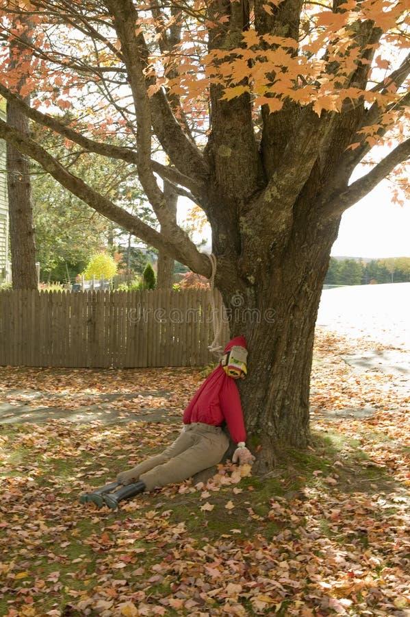 El maniquí de Halloween linchado a partir de otoño coloreó el árbol en el parque nacional del Acadia, Maine imagen de archivo