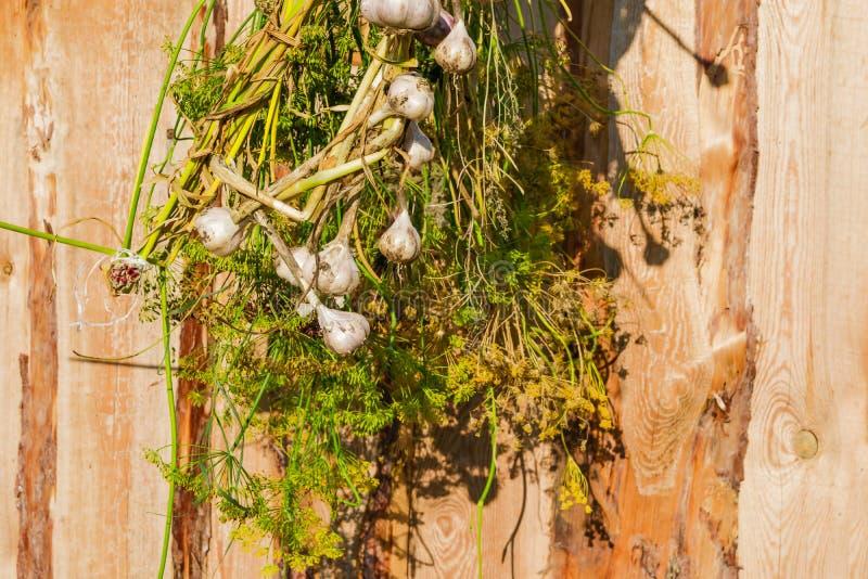 El manojo de ajo y de eneldo hechos en casa se secó en el sol en un fondo de tableros de madera no tratados marrones, imagen de archivo