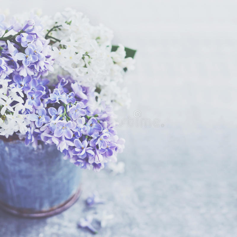 El manojo de lila blanca y púrpura florece en cubo del vintage del metal imagen de archivo libre de regalías
