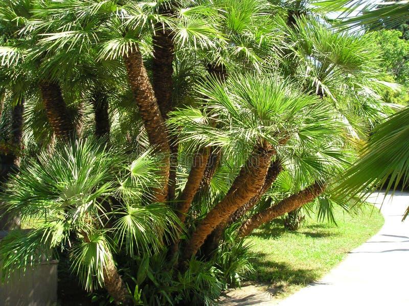 El manojo de palma-flores imágenes de archivo libres de regalías