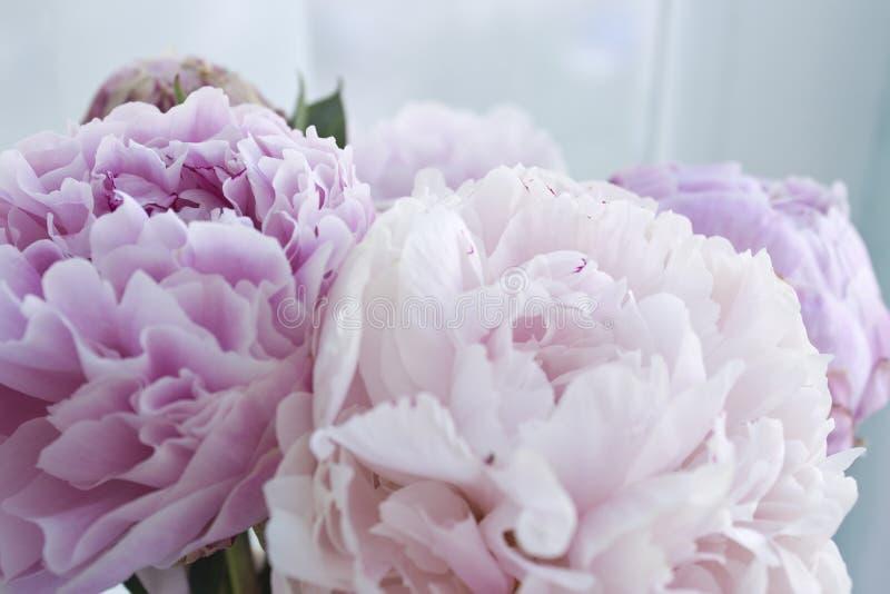 El manojo fresco de peonías rosadas, peonía del primer florece Tarjeta, para casarse fotografía de archivo libre de regalías