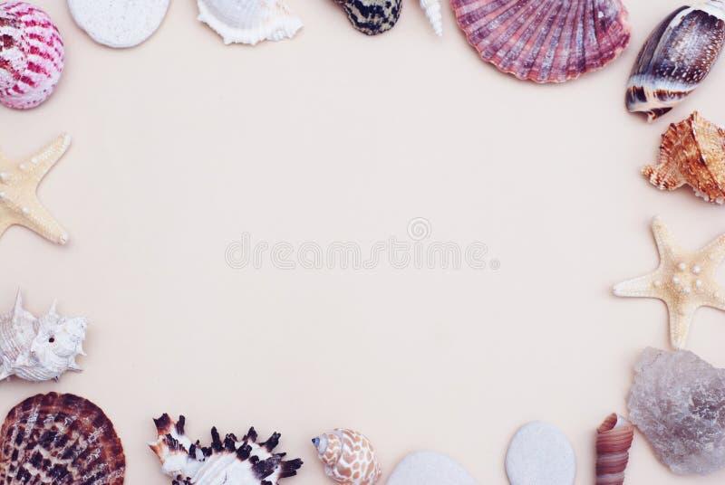 El mar descasca el capítulo en el espacio de marfil neutral de la copia de Backgroundwith para el texto Concepto náutico y de Mar fotos de archivo