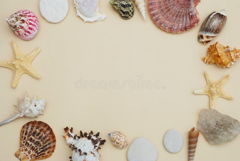El mar descasca el capítulo en el espacio de marfil neutral de la copia de Backgroundwith para el texto Concepto náutico y de Mar foto de archivo