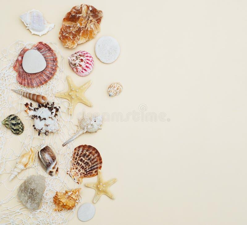 El mar descasca el capítulo en el espacio de marfil neutral de la copia de Backgroundwith para el texto Concepto náutico y de Mar imágenes de archivo libres de regalías