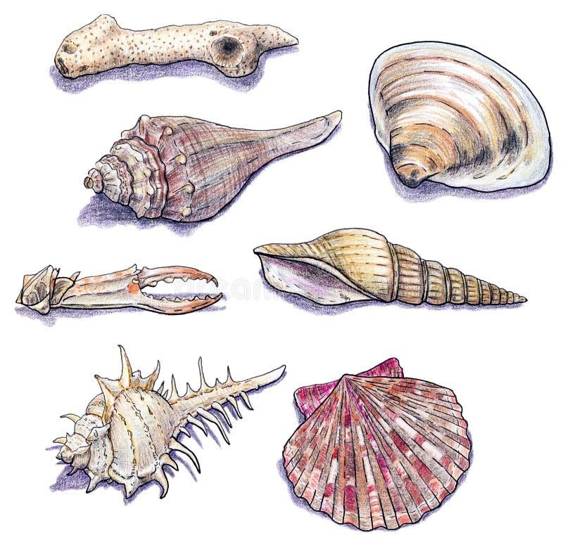 El mar dibujado mano descasca la colección Ejemplo aislado marino del creyón stock de ilustración