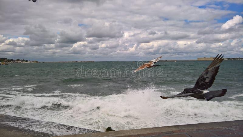El Mar Negro en Sevastopol fotografía de archivo