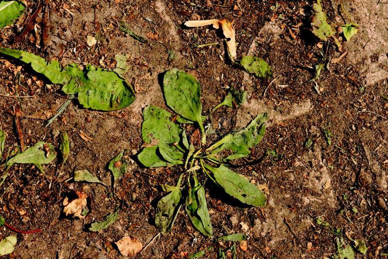 El marchitarse seco de la tierra y de la mala hierba del calor en un día de verano duro fotografía de archivo libre de regalías
