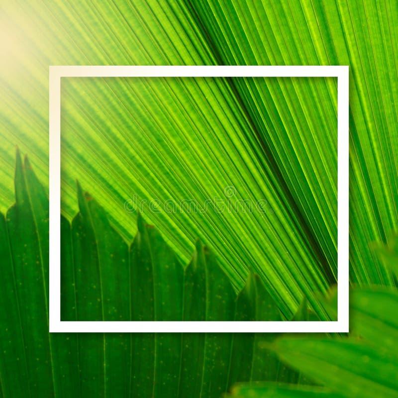 El marco cuadrado, disposición creativa hizo el fondo verde de la palmera de la hoja con la nota de la tarjeta de papel Espacio e libre illustration