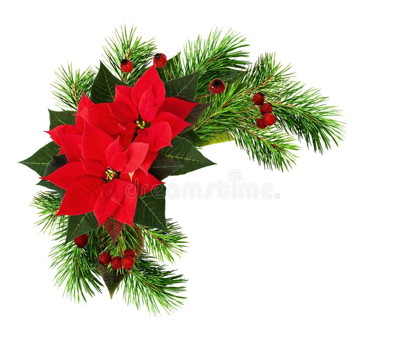 El marco de la Navidad con las flores rojas de la poinsetia, ramitas del pino y se seca fotografía de archivo