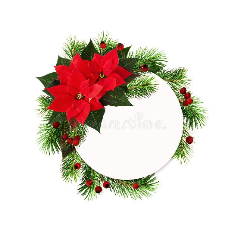 El marco redondo de la Navidad con la poinsetia roja florece, las ramitas del pino foto de archivo