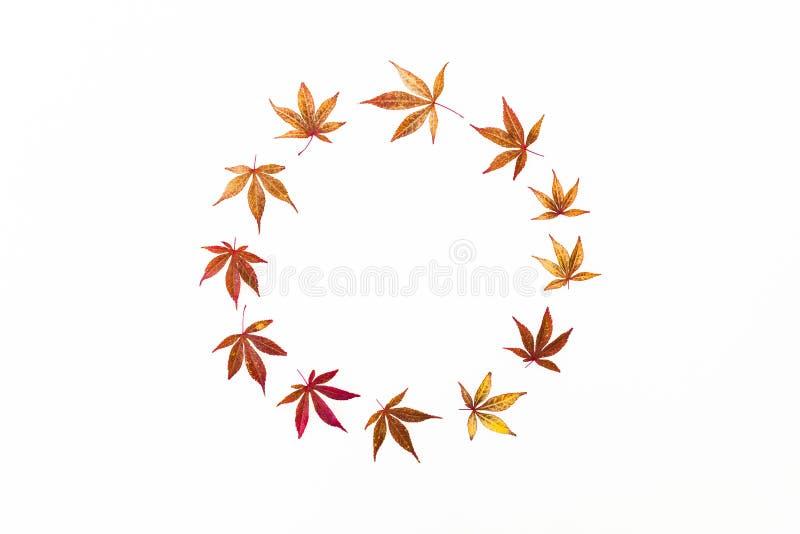 El marco redondo del otoño del árbol rojo de la caída se va en el fondo blanco Endecha plana, visión superior stock de ilustración