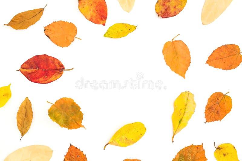 El marco redondo del otoño hecho de árbol colorido de la caída se va en el fondo blanco Endecha plana, visión superior imagenes de archivo