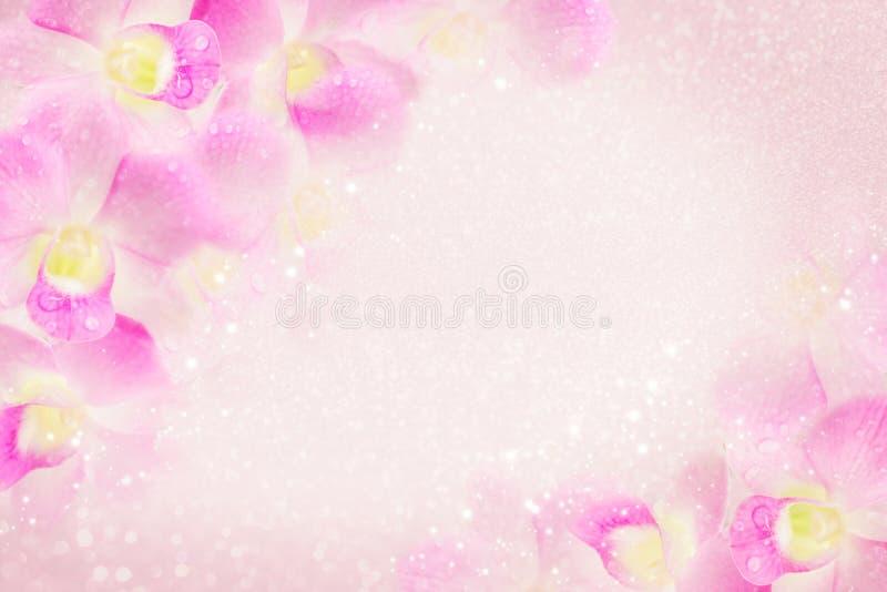El marco rosado de la flor de la orquídea que florece en fondo suave con el bokeh y el brillo encienden, copian el espacio fotografía de archivo