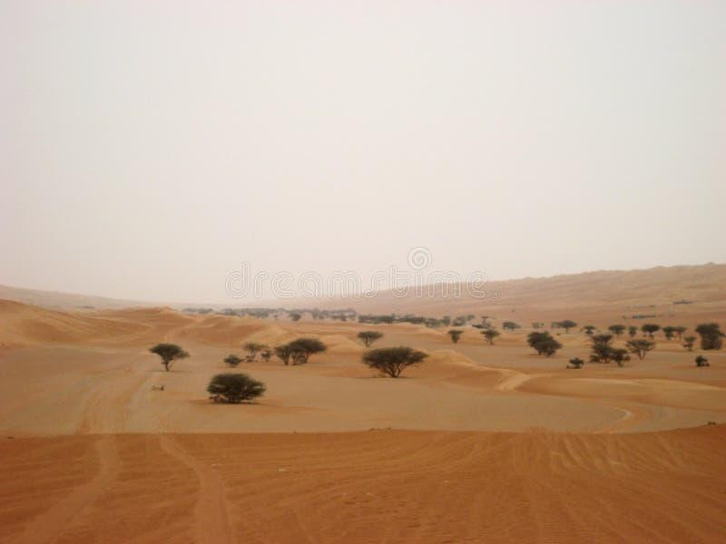 El Medio Oriente o África, los paisajes pintorescos del desierto ajardina fotografía fotos de archivo