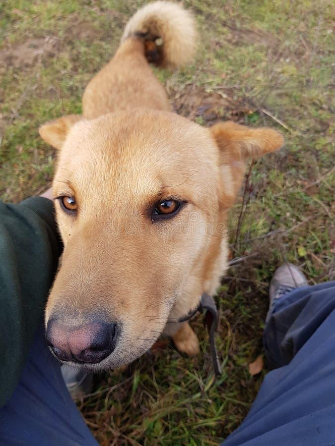 El mejor amigo - un perro imagen de archivo
