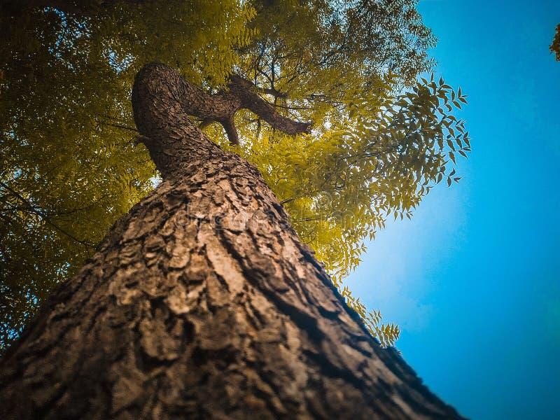 El mejor sorprender de la imagen del árbol del paisaje foto de archivo
