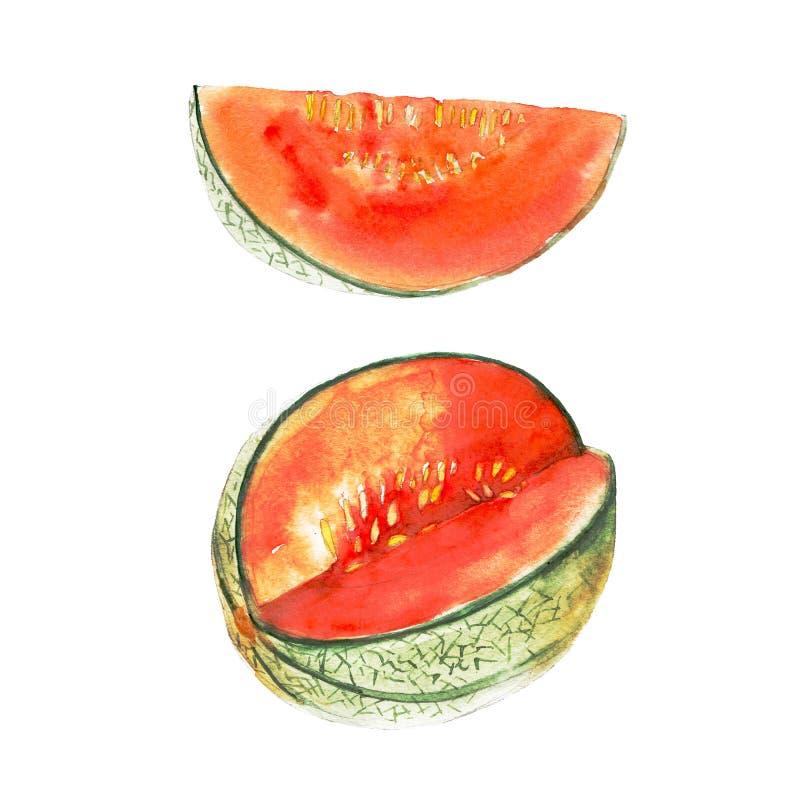 El melón magenta aislado en el fondo blanco, ejemplo de la acuarela stock de ilustración