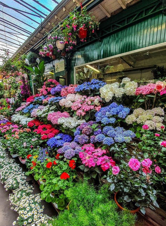 El mercado de la flor en París localizó en el Ile de la Cite, entre la capilla de la catedral y de Sainte-Chapelle de Notre-Dame fotos de archivo