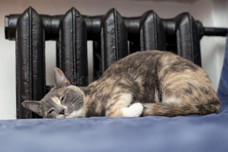El mestizo lindo del gato está durmiendo en un sofá azul cerca de un viejo negro fotografía de archivo