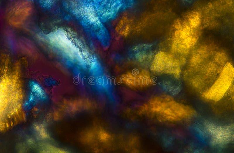 El micrográfo abstracto intrépido, colorido de manosea el músculo y el cara de la abeja fotos de archivo