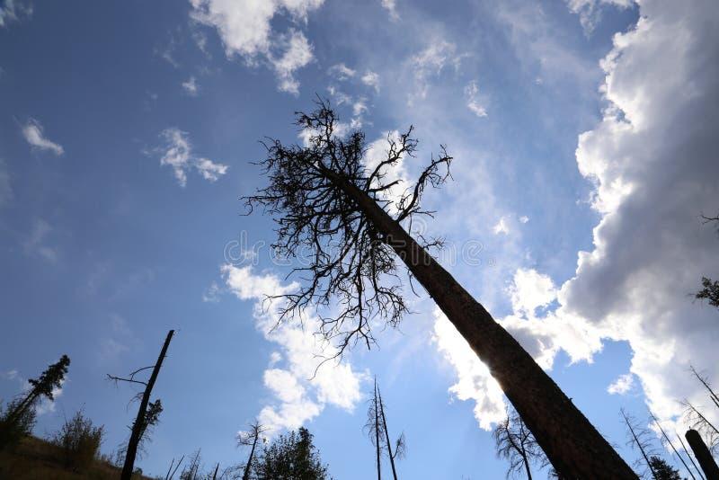 El ministerio de bosques quemó árboles con un cielo azul foto de archivo