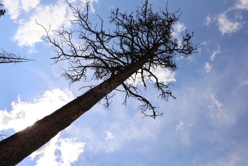 El ministerio de bosques quemó árboles con un cielo azul fotos de archivo
