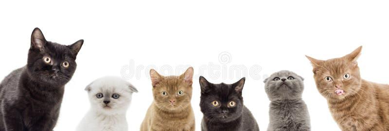 El mirar a escondidas divertido de los gatitos imágenes de archivo libres de regalías