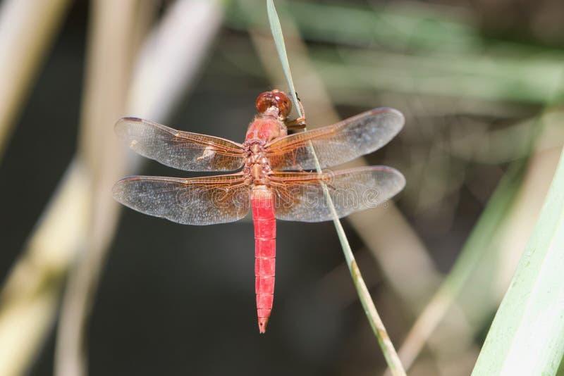 El misterio de insectos en naturaleza imágenes de archivo libres de regalías
