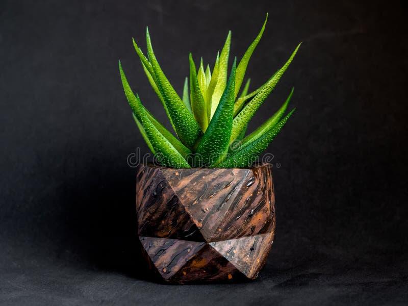 El modelo de madera de Brown pintó el plantador concreto geométrico con la planta suculenta Potes concretos pintados para la deco fotografía de archivo libre de regalías