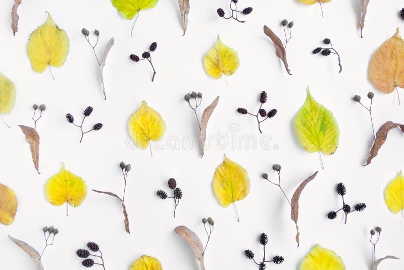El modelo del amarillo del otoño se va, los conos y las nueces del aliso en el fondo blanco Visión superior, endecha plana, visió fotos de archivo