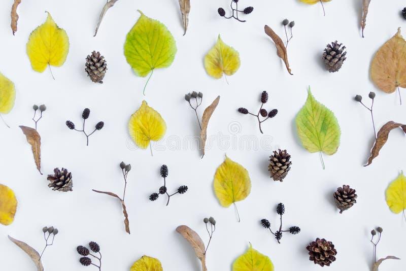 El modelo del amarillo del otoño se va, los conos y las nueces del aliso en el fondo blanco Visión superior, endecha plana, visió fotos de archivo libres de regalías
