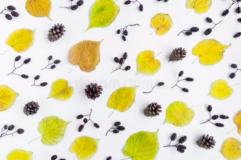 El modelo del amarillo del otoño se va, los conos y las nueces del aliso en el fondo blanco Visión superior, endecha plana, visió foto de archivo