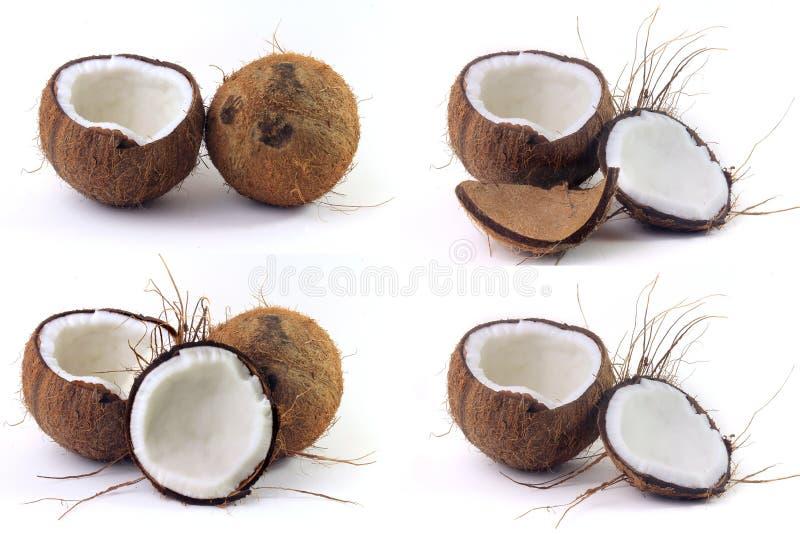 El modelo determinado de los cocos, cortó por la mitad aislado en el fondo blanco imagen de archivo