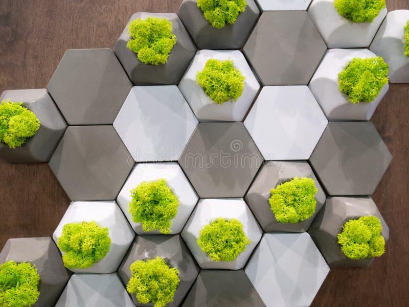 El modelo geométrico en una pared hecha de las células del hexágono con evegreen succulents de las plantas fotos de archivo