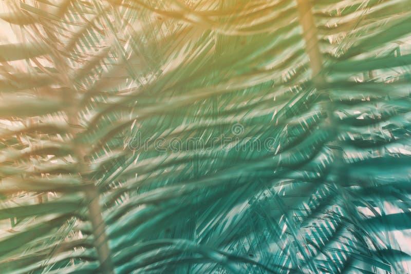 El modelo geométrico natural de la palma del arte de la decoración entonó stock de ilustración